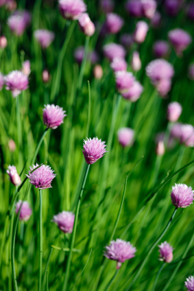 Achat Ginkgo Biloba | Avantages - Santé par les plantes - Santé